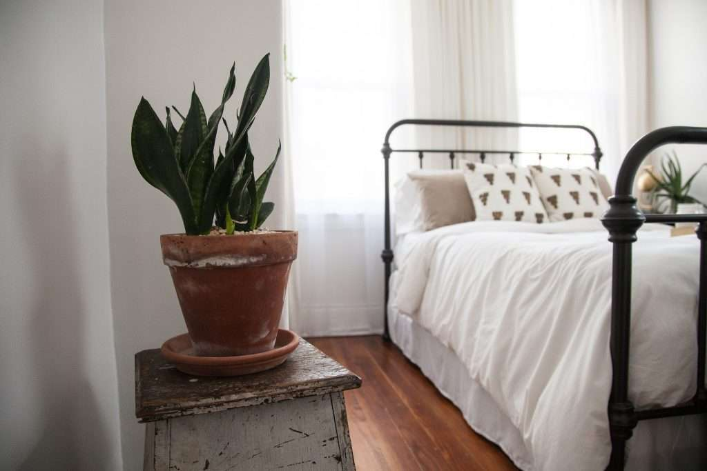 snake plant in a bedroom