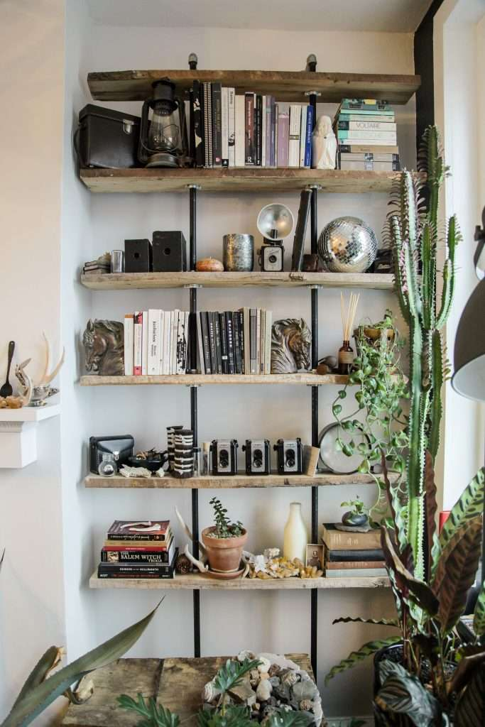 bookshelf with plants and cameras