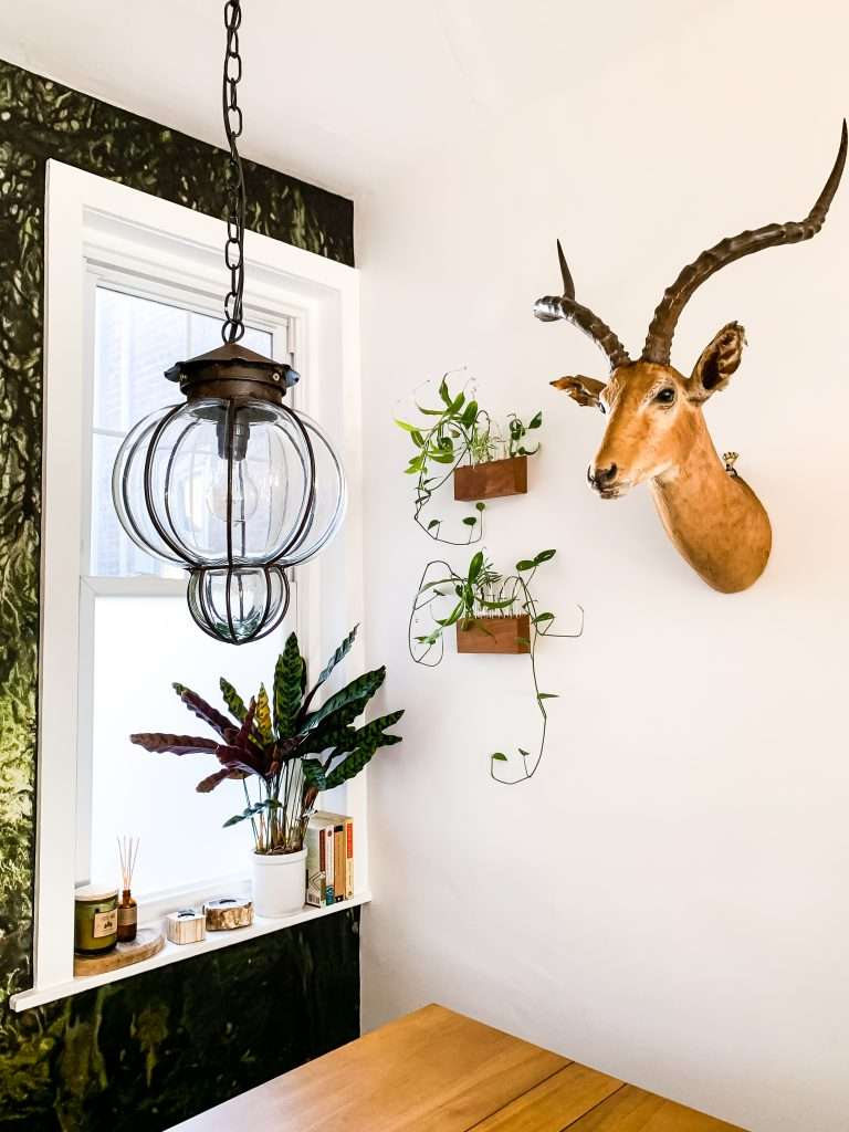 vintage pendant light and mounted antelope head