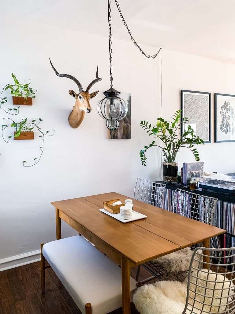 modern dining area with mounted antelope head and propagation planters