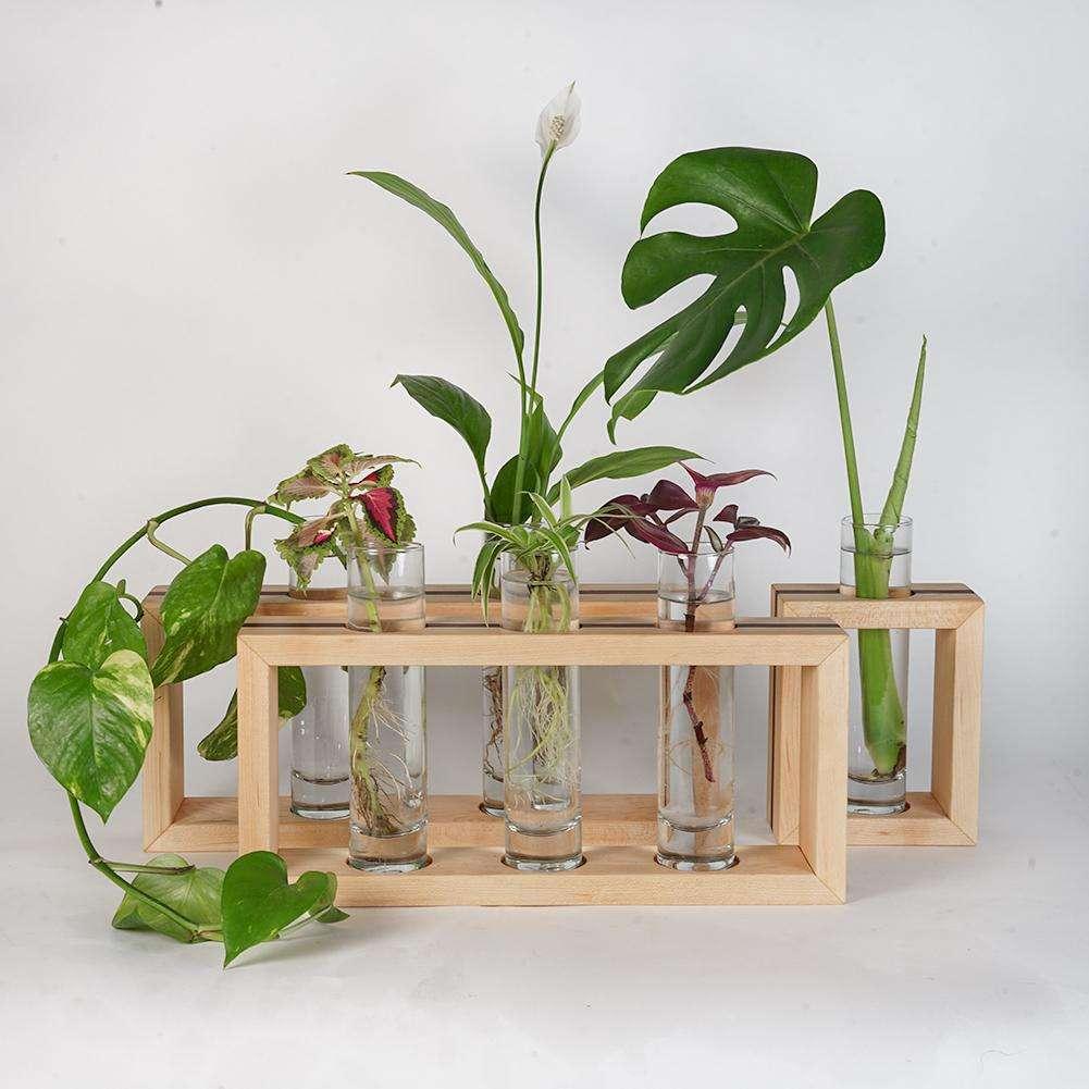 Modern Propagation Frame with Plants