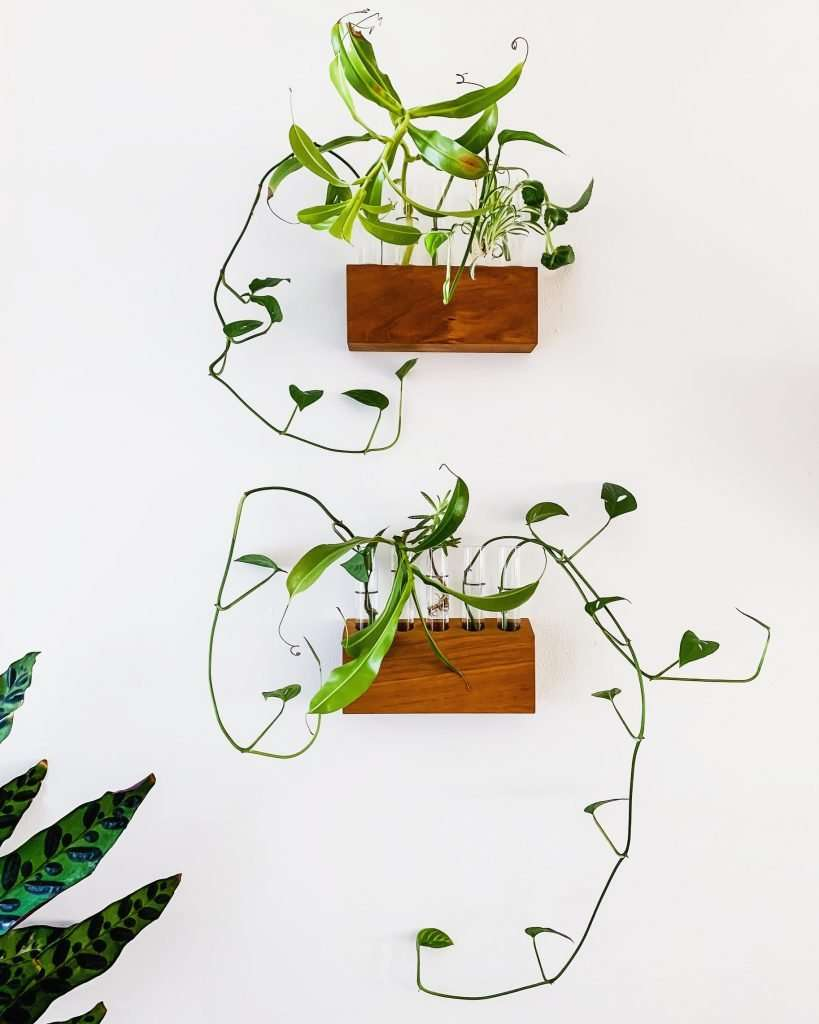 propagation planters with monstera adansonii and other plants