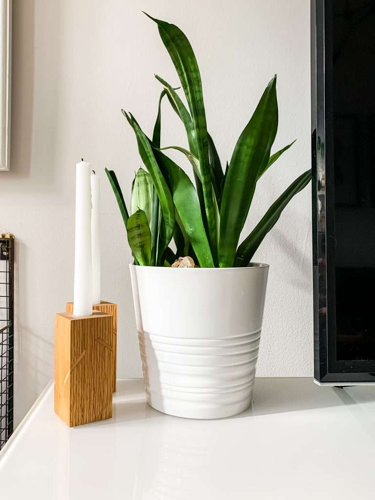 How to Grow, Care For & Propagate Snake Plants